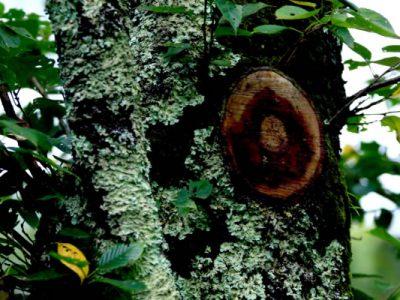 樹木医の仕事